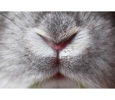 Rabbit runny nose Video