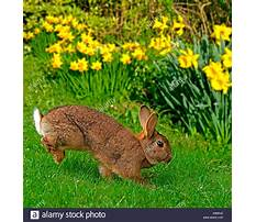Rabbits hopping images Video