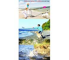Recall dog training derby.aspx Video