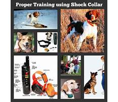 Rechargeable dog training collars.aspx Video