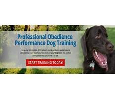 Richmond va dog training.aspx Video