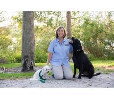 Sarasota dog training.aspx Video