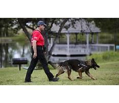 Search and rescue dog training sacramento.aspx Video