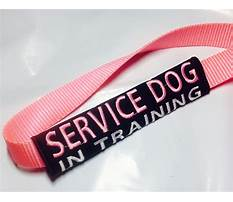 Service dog in training leash wrap Video
