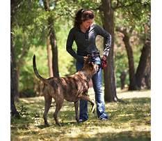 Service dog training dfw Video