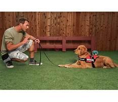 Service dog training in delaware Video