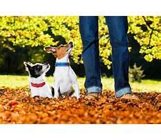 Service dog training nashville tn.aspx Video