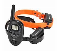 Shock collars for training dogs Video