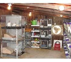 Small rabbitry Video