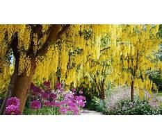 Spring flowering garden trees Video