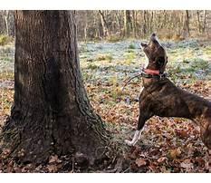 Squirrel hunting dog training tips.aspx Video