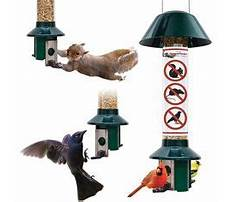 Squirrel proof bird feeder lowes.aspx Video