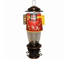 Squirrel x bird feeder reviews Video