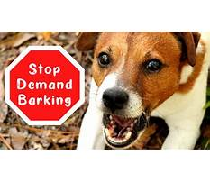 Stop dog barking for attention Video