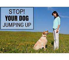 Stop dog jumping Video