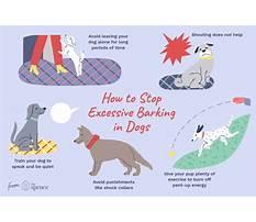 Stop my barking dog Video