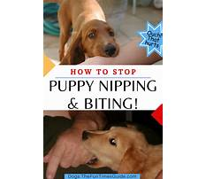 Stop puppies nipping Video