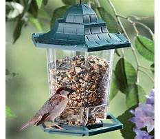 Suet bird feeder woodworking plan.aspx Video