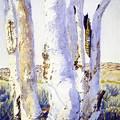 The Trees & The Wild