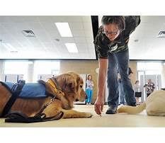 Therapy dog training az Video
