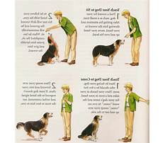 Train deaf dog hand signals Video