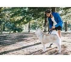 Train deaf dog Video
