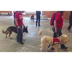 Train dog as therapy dog Video