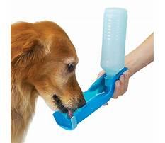 Train dog drink water bottle Video