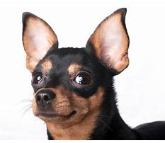 Train dog ears Video