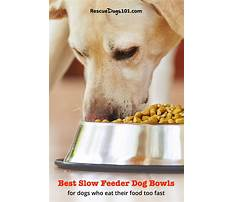Train dog eat slower Video