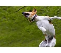 Train dog to do backflip Video
