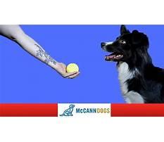 Train dog to drop ball at feet Video