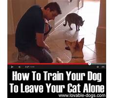 Train dog to leave cat alone Video