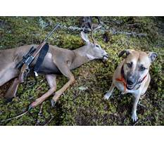 Train dog track wounded deer Video