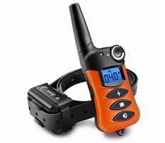 Train dog with e collar Video