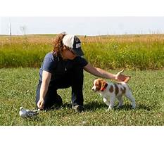 Training a hunting dog to come.aspx Video