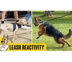 Training dog leash aggression.aspx Video