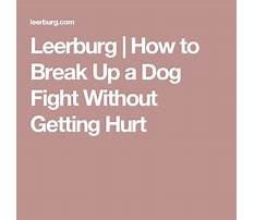 Training dog to walk on a leash without pulling.aspx Video