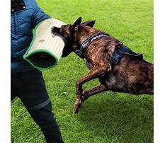 Training dogs that bite Video