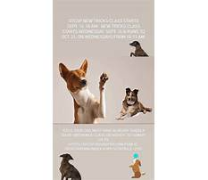Training dogs to help others.aspx Video