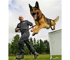 Training police dogs nz Video