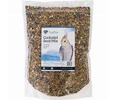 Wean parakeet from seeds only diet Video