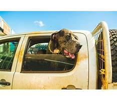 West chester ohio dog training.aspx Video