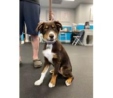 Westchester dog training.aspx Video