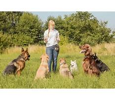 What industry is dog training considered Video