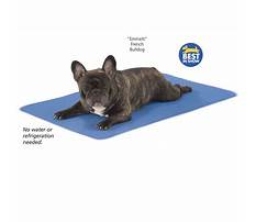 What is a training leash for dogs.aspx Video
