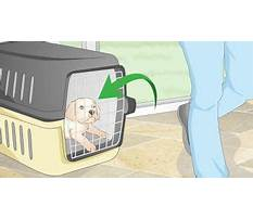 When your dog has an accident who is potty trained.aspx Video