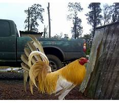 Where to buy chicken coops in kentucky Video