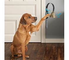 Which bell for dog training Video