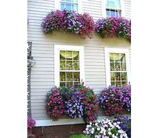 Window flower box design ideas Video